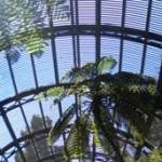 Botanical Gardens (b), Balboa Park, San Diego, California