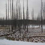 4 - Yellowstone, January 14th (7)